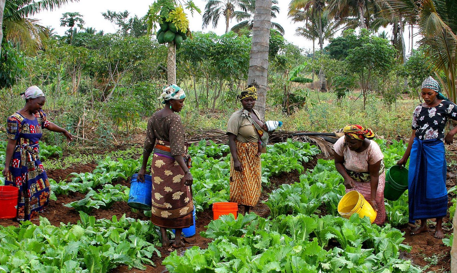 Un programme pour faciliter l'accès des TIC aux femmes rurales