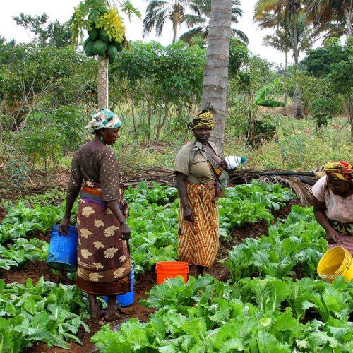 Femme et ruralité en Afrique