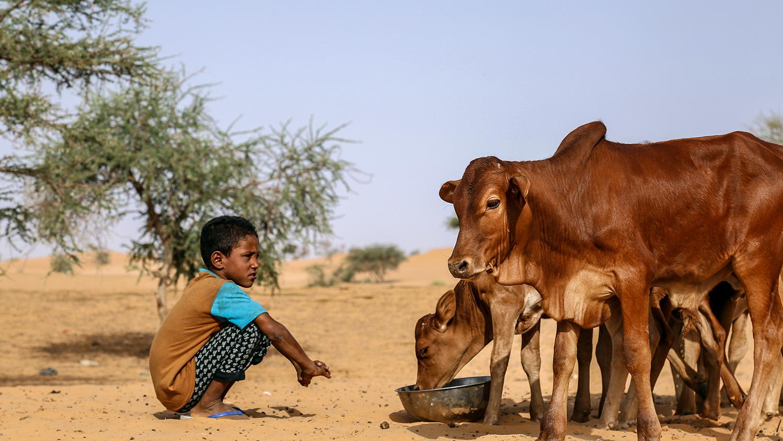 Un webdocumentaire au coeur du développement rural – Capitalisation du programme RIMRAP