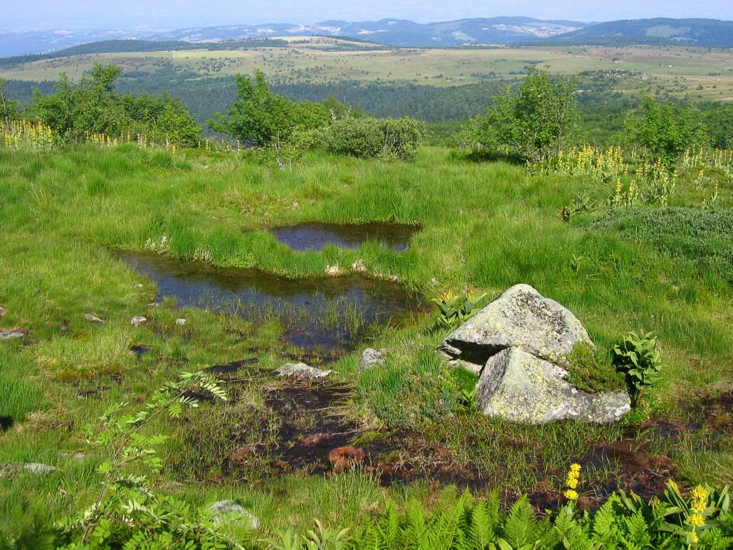 Comment protéger les zones humides en changeant les comportements ?